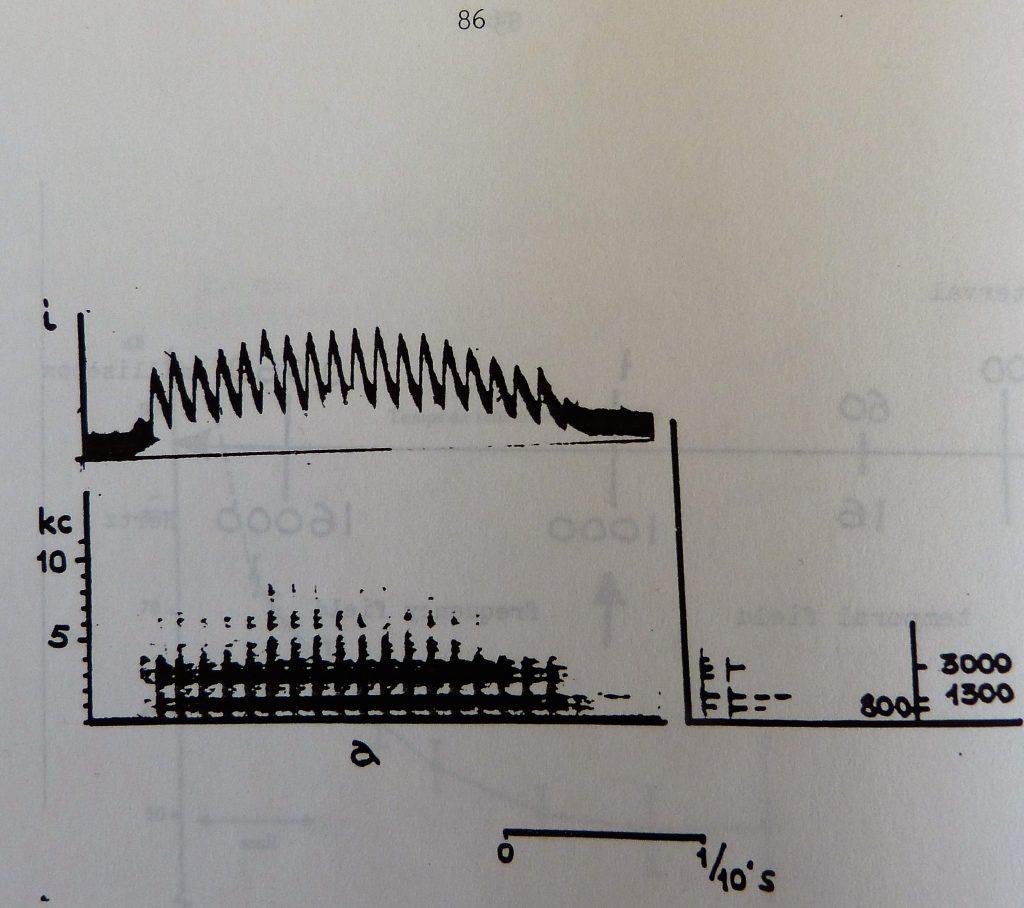 img694 P1090414